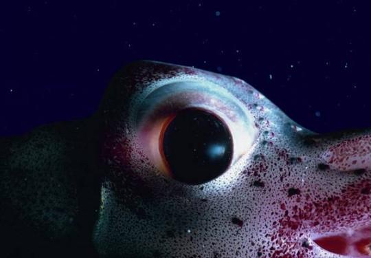 Kék mélység DVD