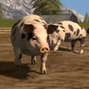 A PETA a Farming Simulator 17-ben is kampányol